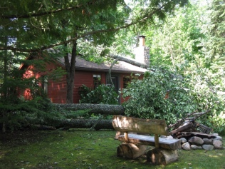 Trees down on the neighbor's cabin