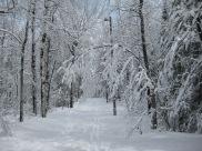 Lester-Amity ski trail