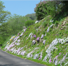 Driveway flowers