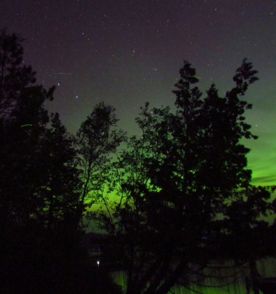 Northern Lights through the trees