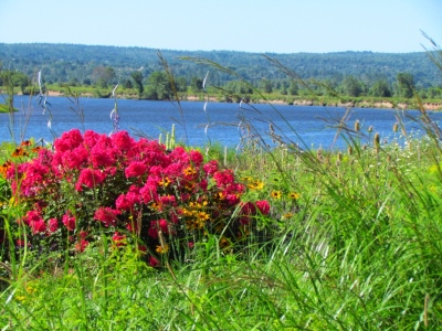 Roadside flowers by the Annapolis River