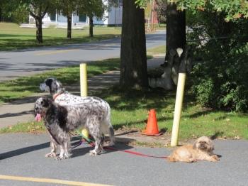 Patient dogs