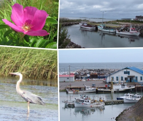 Various views in Gaspésie
