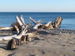 Wonderful driftwood!