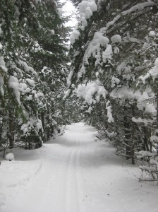 The Banadad Trail