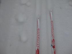 Skis and animal tracks