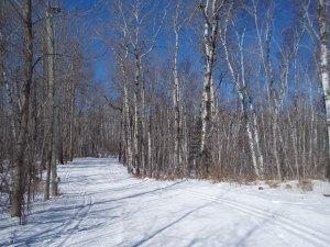 Lester Amity Trails 1