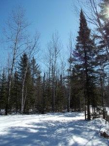 Lester Amity Trails 2
