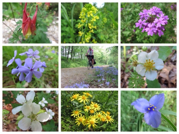 Katy Trail wildflowers