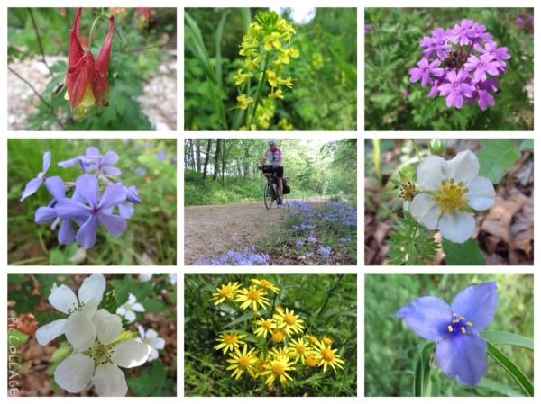 Katy Trail wildflowers