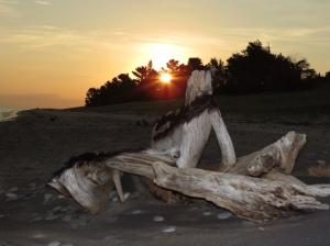 Sunrise and driftwood