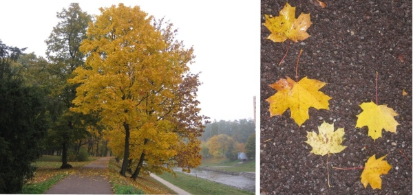Fall leaves in Ostrava