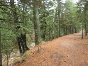Trail along Amity Creek