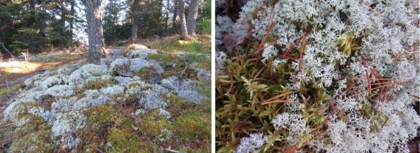 Lichen along the trail
