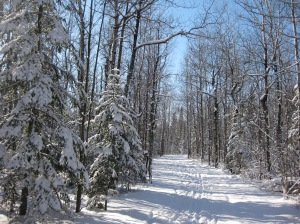 Ungroomed ski trail at Lester-Amity