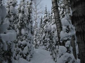 Snowshoeing at Bearskin Lodge