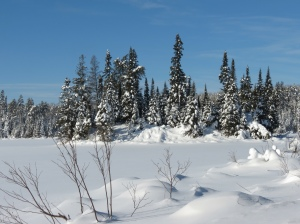 An island along the Gunflint Trail