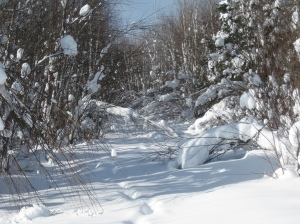 Unnavigable ski trail