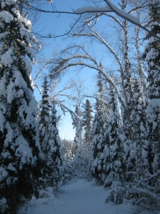 Snowy trail at Bearskin Lodge 1