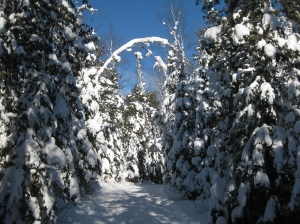 Snowy trail at Bearskin Lodge 2