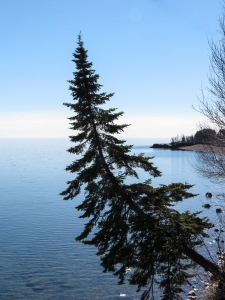 Tree out over Lake Superior