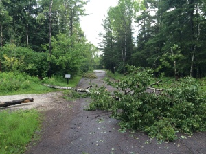 Trees down across driveway