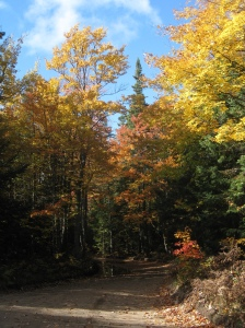 Fall leaves Crisp Point road