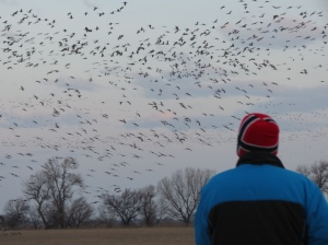Rich watching sandhill crane migration