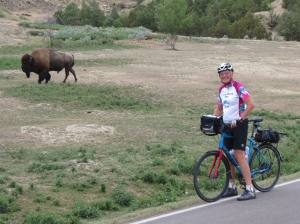 Rich cycling by a bison