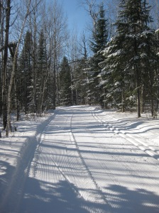 Lester on groomed trails