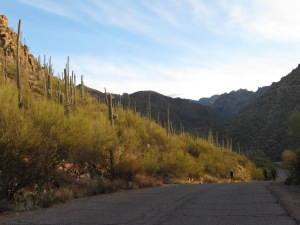 Sabino Canyon sunrise