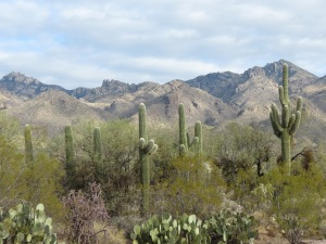 Sabino Canyon 1