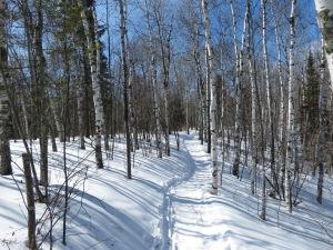 Lester River Trail