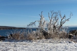 Icy bushes Grand Marais