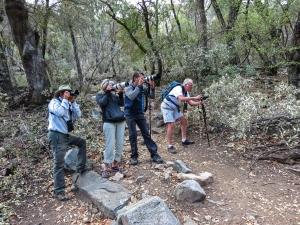 Birders photographing Elegant Trogon