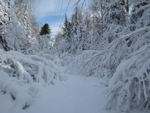 Blizzard snowshoeing 1