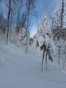 Blizzard snowshoeing 2