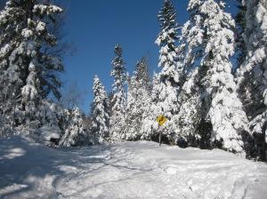 Blizzard XC skiing 1