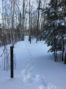 Blizzard snowshoeing 3