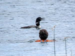 Molly swimming with loons 1