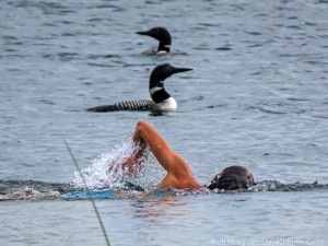 Molly swimming with loons 3