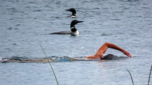Molly swimming with loons 4