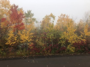 Hawk Ridge colors in fog
