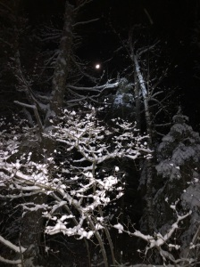 Moon and snow covered trees at Lester